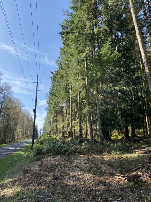 powerline tree clearance